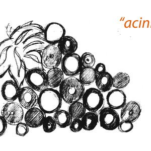 acini etn_art 5