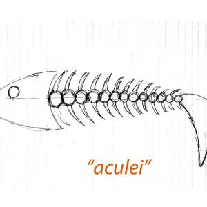 aculei3 etn_art 4